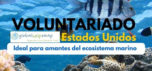 Voluntariado en Estados Unidos, para amantes del ecosistema marino