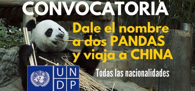 Convocatoria de Naciones Unidas para que le dés un nombre a dos pandas y ganes un viaje a China