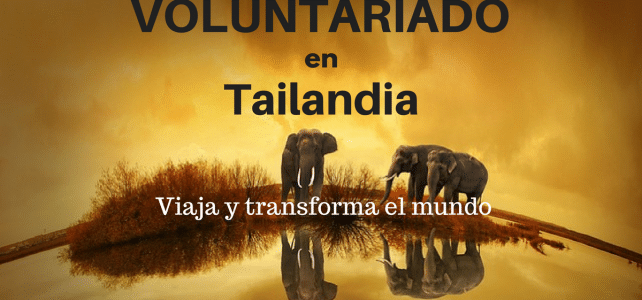 Voluntariado en Tailandia